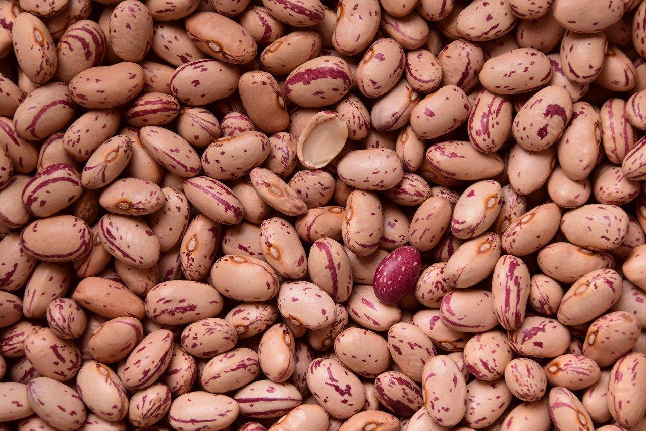 beans legume